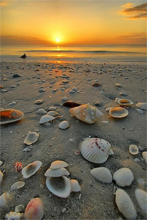 Beautiful Sea Shell Pictures (10)