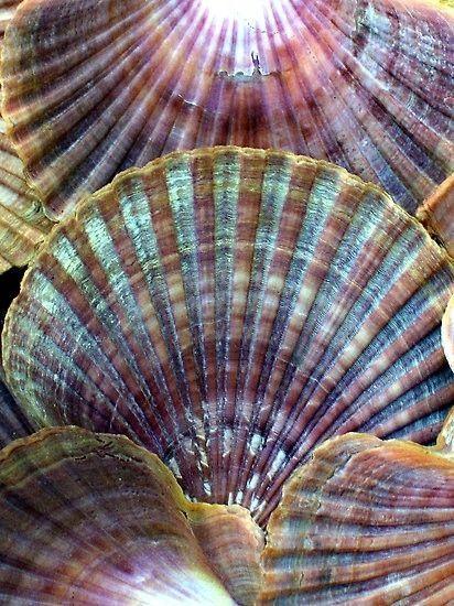 fall shells